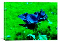 Blue Rose, Canvas Print