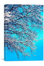 Winter Bliss, Canvas Print