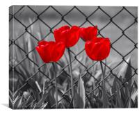 RED TULIPS, Canvas Print