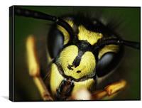 Hello Summer Wasp, Canvas Print