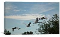 Fly fly away, Canvas Print