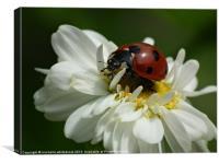 Ladybug, Canvas Print
