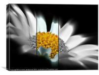 Flower 9, Canvas Print