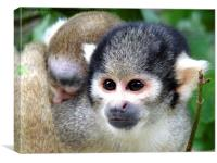 Squirrel Monkey with Baby, Canvas Print