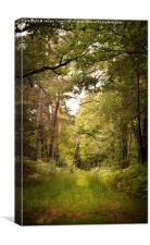 Nature's Pathway, Canvas Print