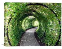 Tunnel of Ivy