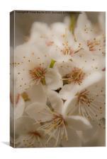 Blossom, Canvas Print
