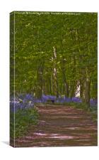 Bluebell Walk, Canvas Print