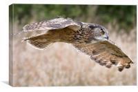 Eagle Owl Flight, Canvas Print