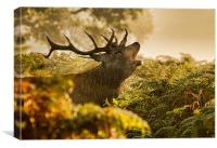 Calling Stag, Canvas Print