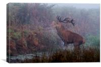 Rampaging Stag, Canvas Print