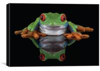 Red Eye Tree frog, Canvas Print