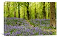Bluebells galore, Canvas Print