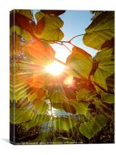 Sun Through Leaves, Canvas Print