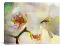 Textured Orchid, Canvas Print