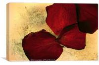 Textured Rose Petals, Canvas Print