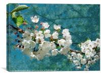 Blossom Texture, Canvas Print