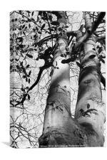 Tree Shadows, Canvas Print