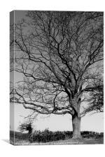 Proud Tree, Canvas Print