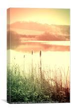 Reeds, Canvas Print