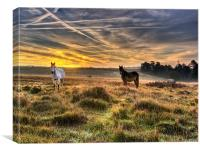 Early Morning Horses, Canvas Print