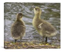 Im bigger - so you test the water!, Canvas Print