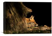 Red Fox in the Sunlight, Canvas Print