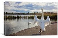 Standing Swan at Poole Park , Canvas Print