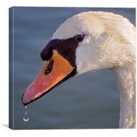 Swan Droplet Portrait, Canvas Print