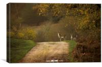 Deer in the New Forest, Canvas Print
