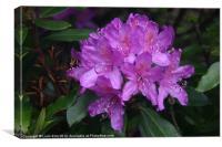 Pretty Purple flowers, Canvas Print