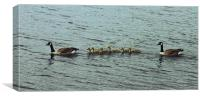 Canadian Geese Family, Canvas Print