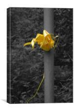 Yellow Ribbon, Canvas Print
