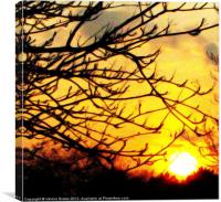 Silhouette of a tree branch, Canvas Print