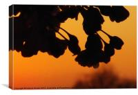 Flowers against orange sky, Canvas Print