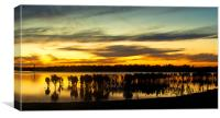 Mangrove sunset at Tooradin, Canvas Print