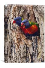 Rainbow Lorikeets , Canvas Print