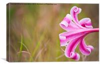 african lilly, Canvas Print