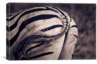 Zebra bum, Canvas Print