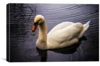 Swan on the River Wye, Canvas Print
