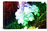 Rainbow flower, Canvas Print