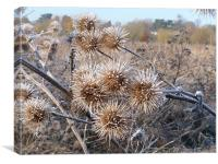 Frost on thistles, Canvas Print