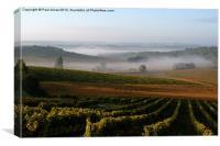 Mist over Cognac Vines, Canvas Print
