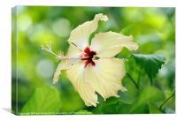Maldives Blooms, Canvas Print