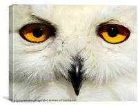 The Snowy owl, Canvas Print