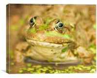 The Marsh Frog, Canvas Print