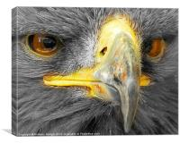 Bird of Prey - Up close and personal, AGAIN, Canvas Print