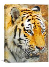 The Amur Tiger, Canvas Print