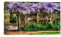 Wall of Wisteria HDR, Canvas Print