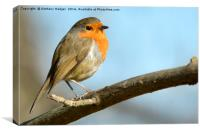 Posing Robin, Canvas Print